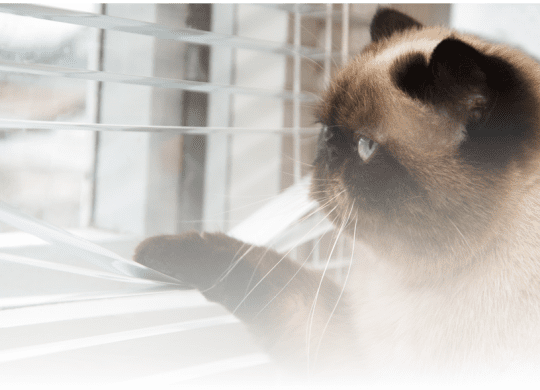 Photo of cat peering through blinds
